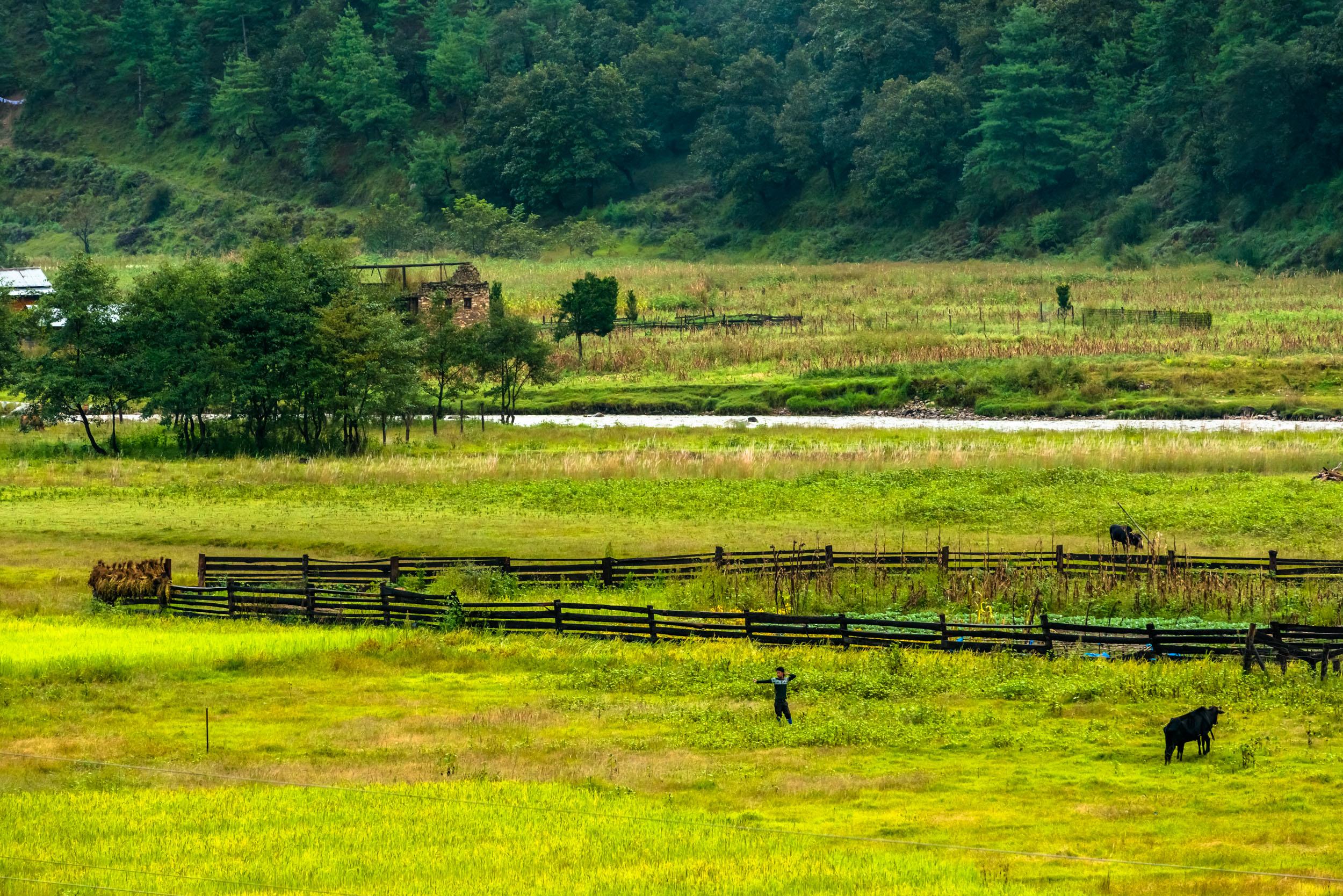 Wooden Cattle Enclosure
