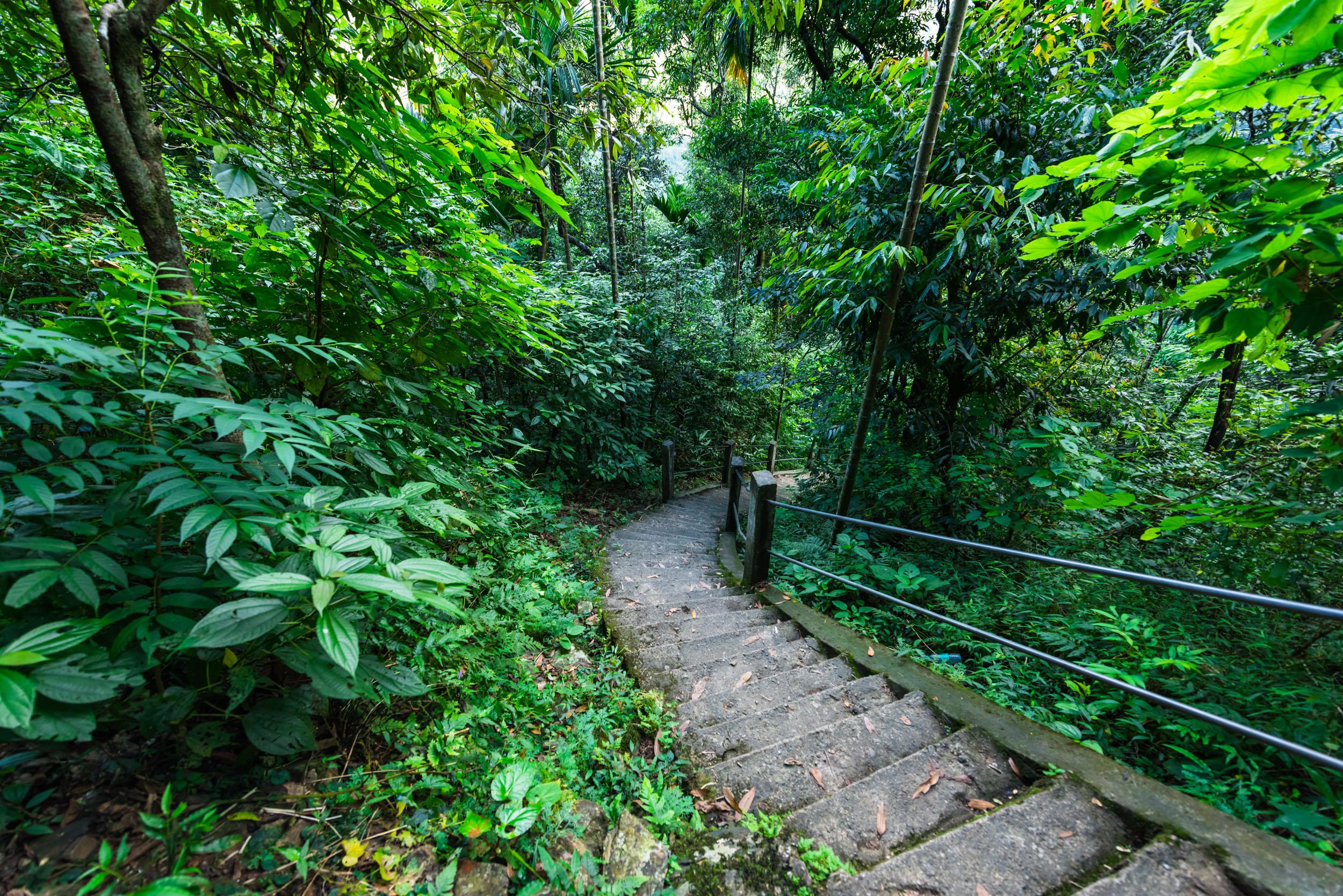 Steps on the way to Double Decker Living Root Bridge,Meghalaya