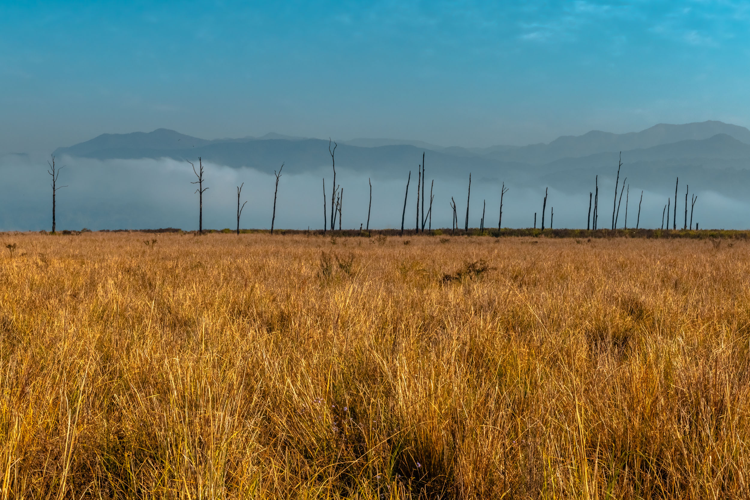 Grass Lands of Jim Corbett