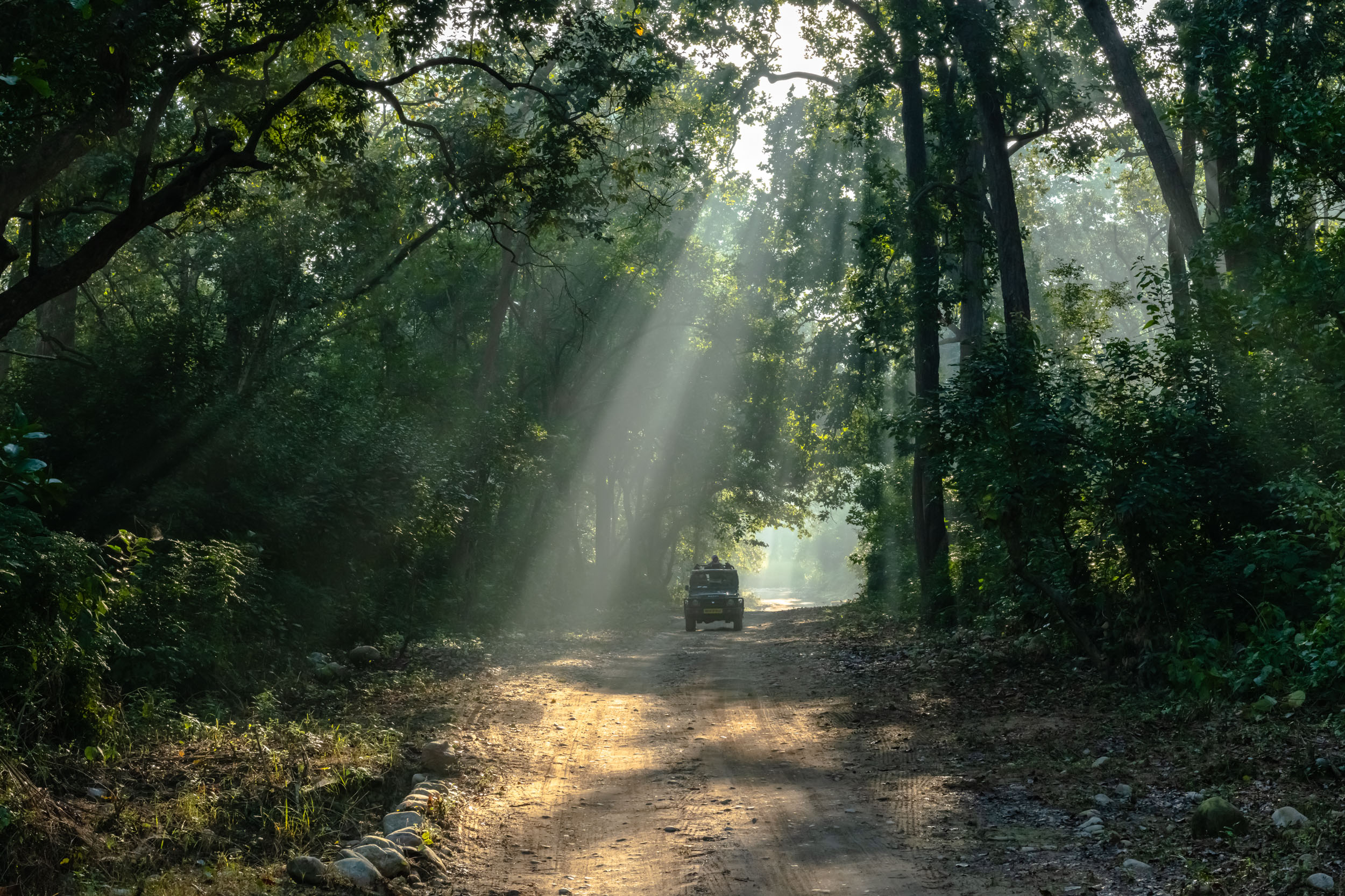 God beams during Morning safari