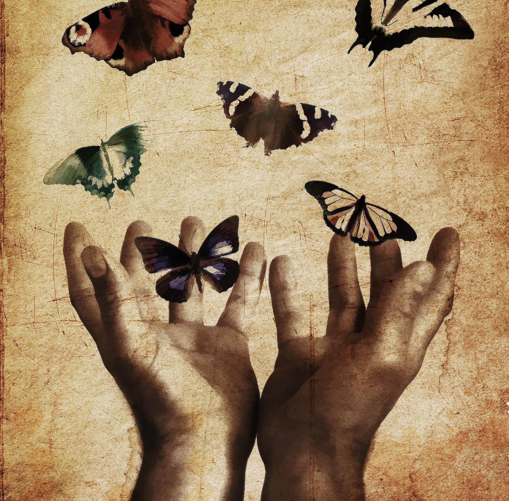 butterflies-843298.jpg