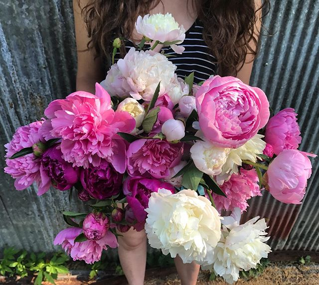 Who loves peonies?! We saved most of our blooms for Mother's Day at Market and are finally using the last of them for this Saturday @downtowngreenmarket . The peony is the queen of spring and I wish their season was longer than a month! #flowerfarming
