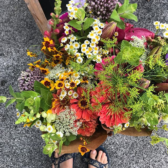 Farm update: Today due to rain we will not be setup @paintedhousetn for our usual pop-up. But this rain means next week we will have bunches of summer blooms ready for pickup!