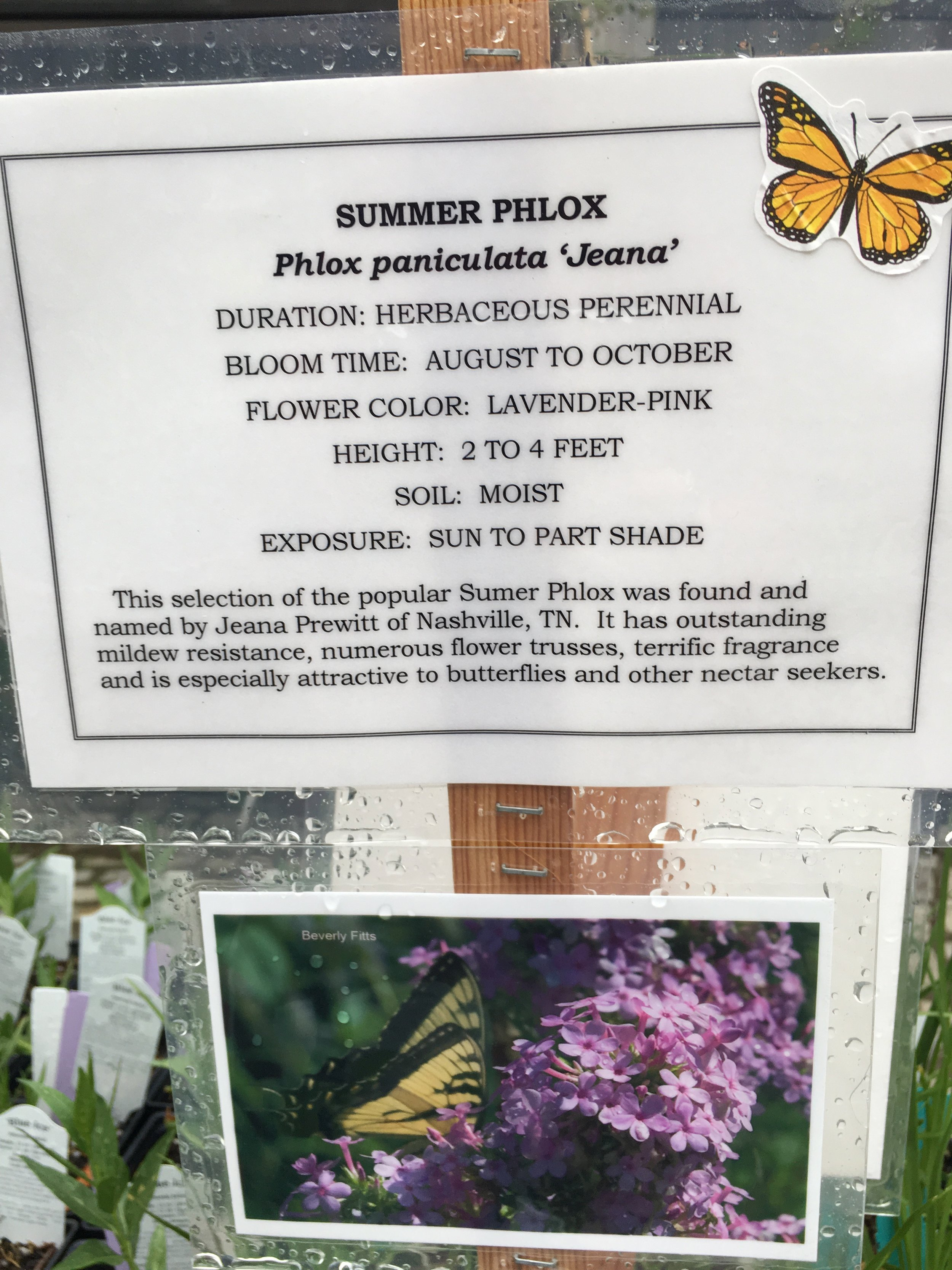 One of my - first orders of business was attending a lecture on how and what to plant for pollinating bees and butterflies.