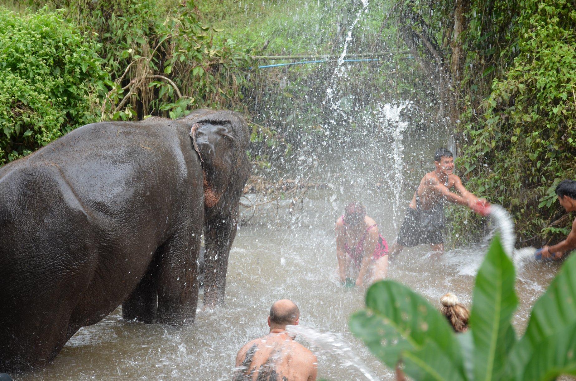 elephant splash party.jpg