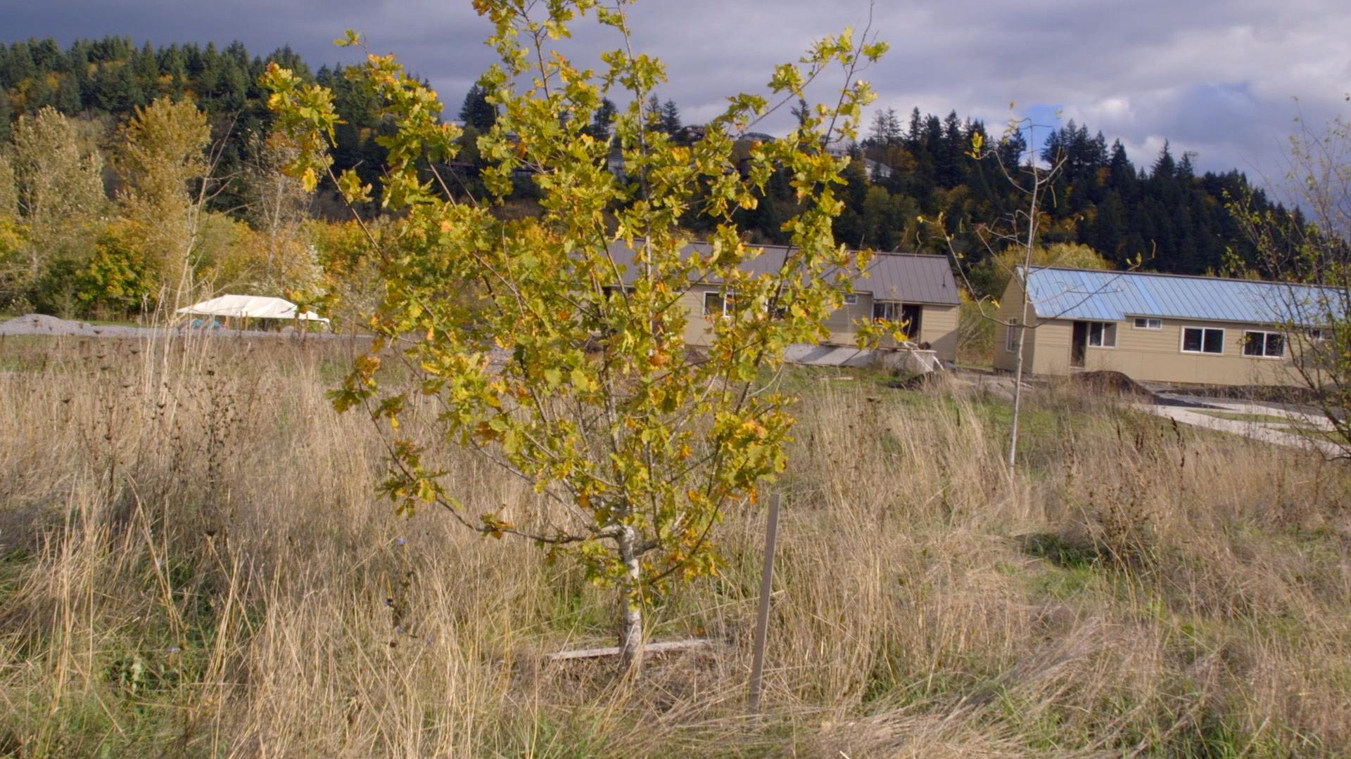 7,000 Trees Still.11.jpg