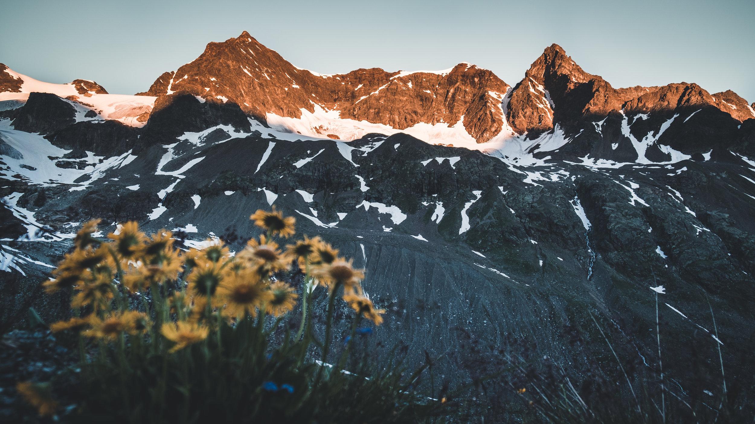 Sonnenaufgang an Silvrettahorn und Schneeglocke