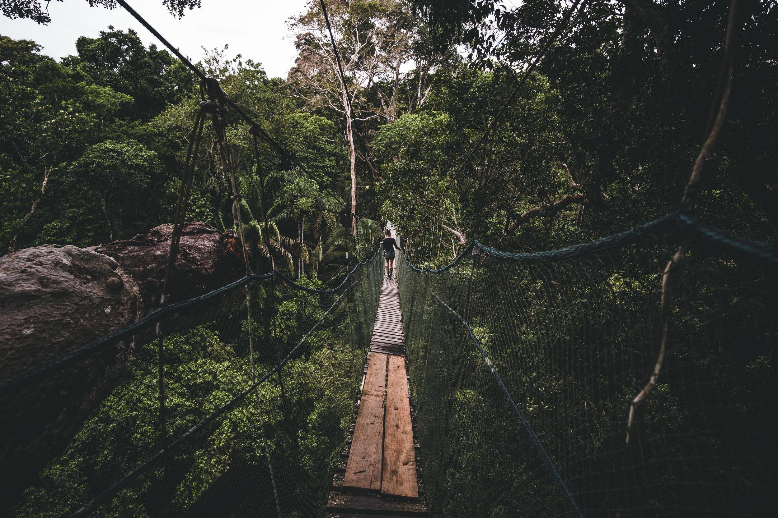 Tree walk |Tambopata national reserve