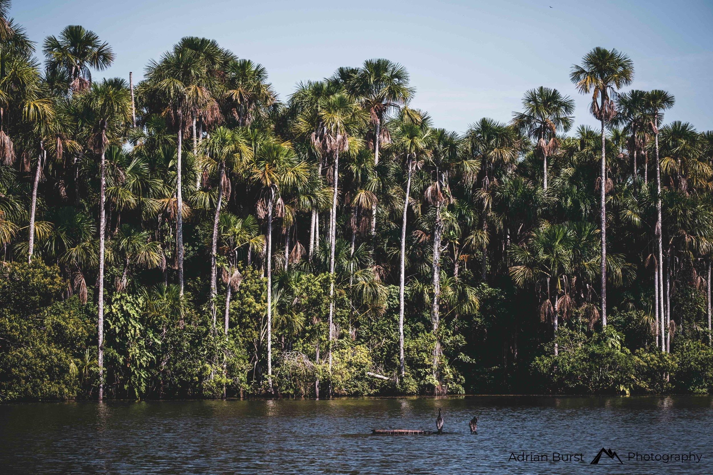 155 | Lake Sandoval, Tambopata national reserve