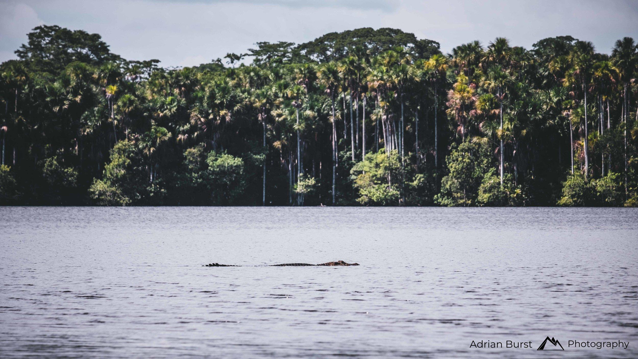 154 | Lake Sandoval, Tambopata national reserve