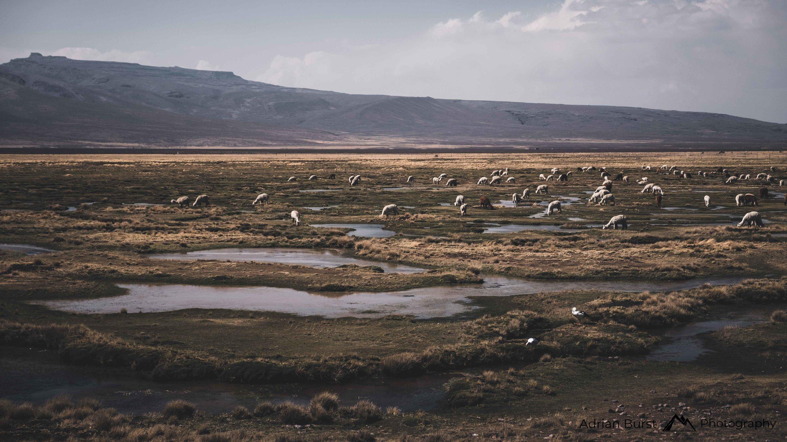 123 | Highlands, Arequipa