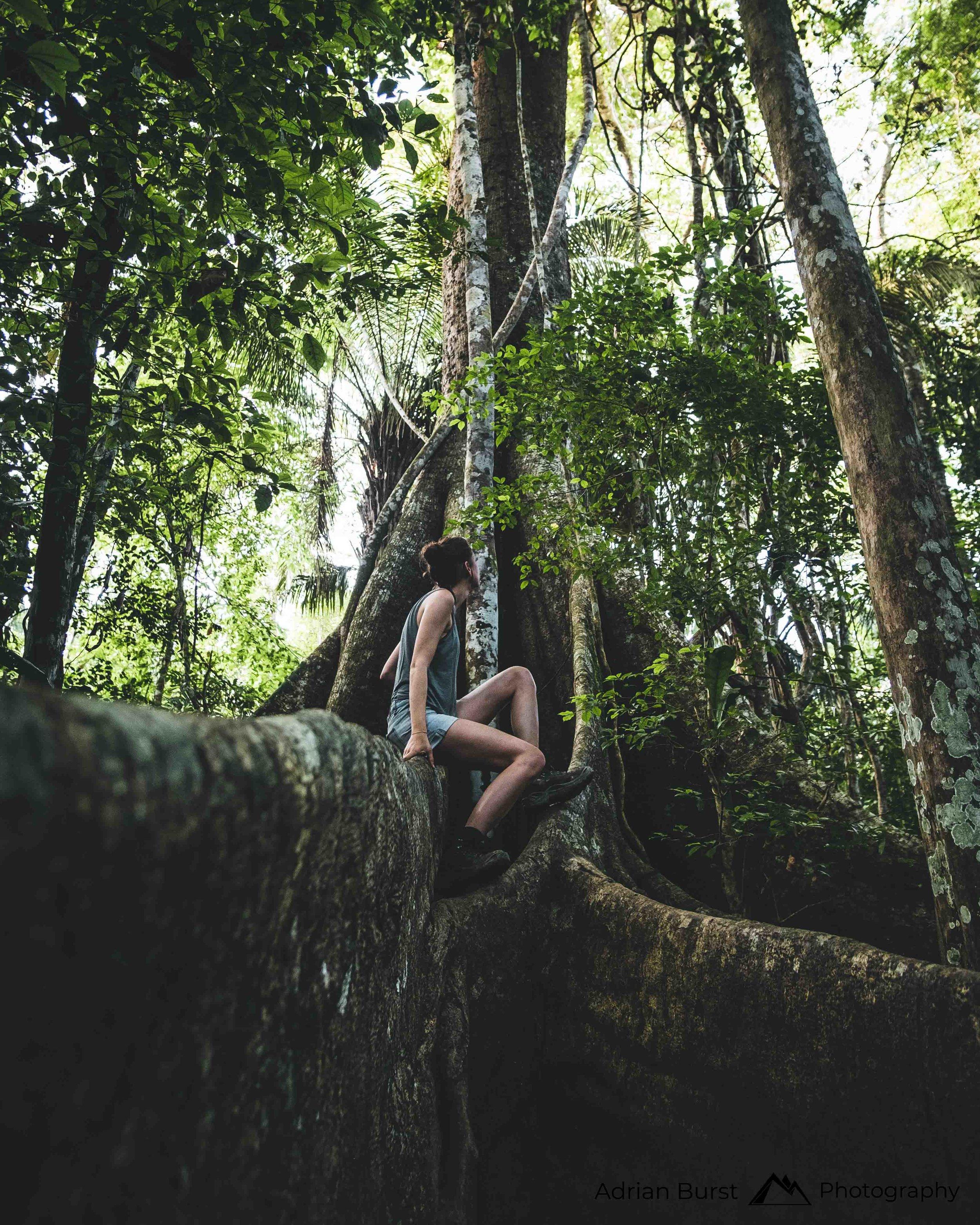 174 | Tambopata national reserve