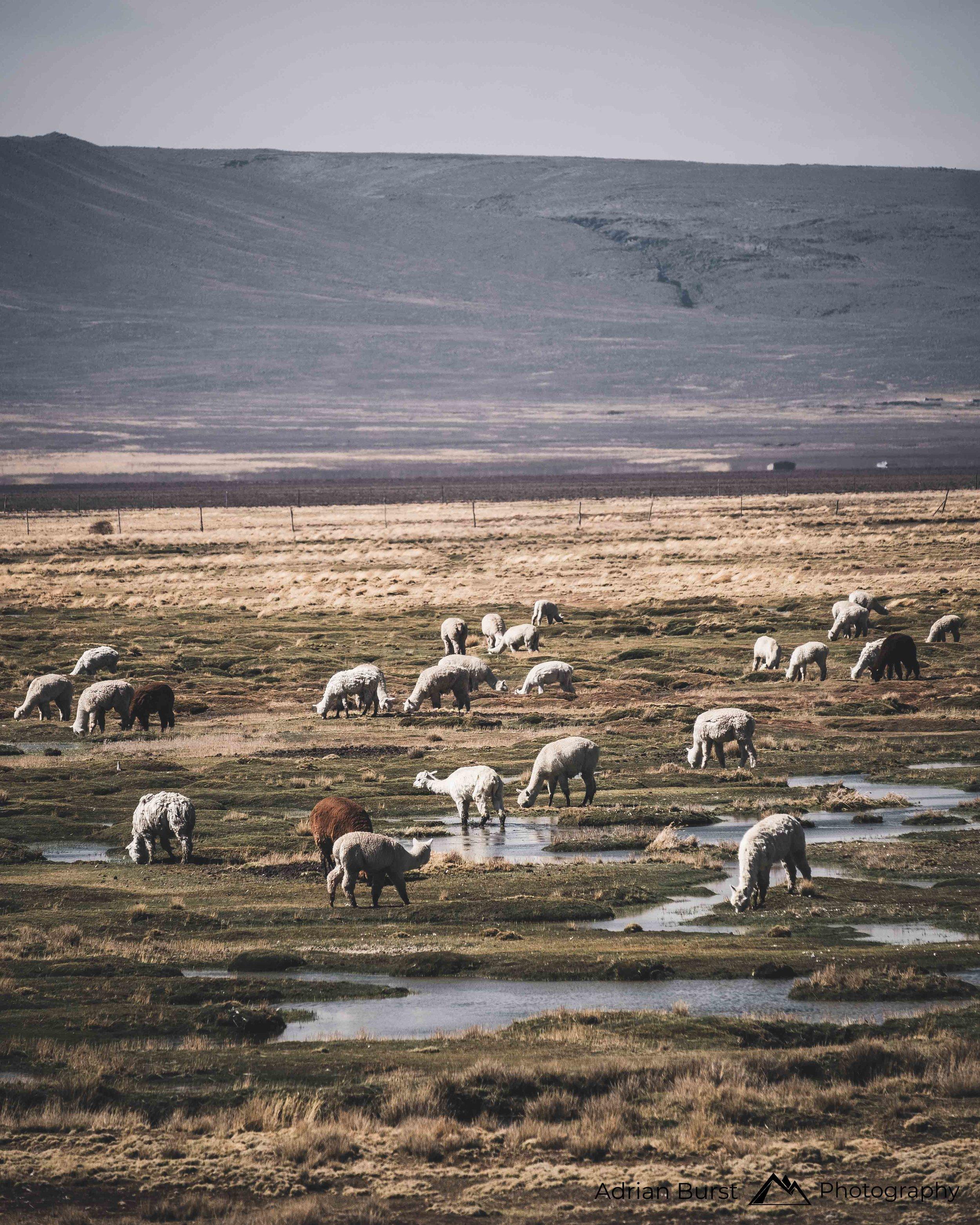 122 | Highlands, Arequipa