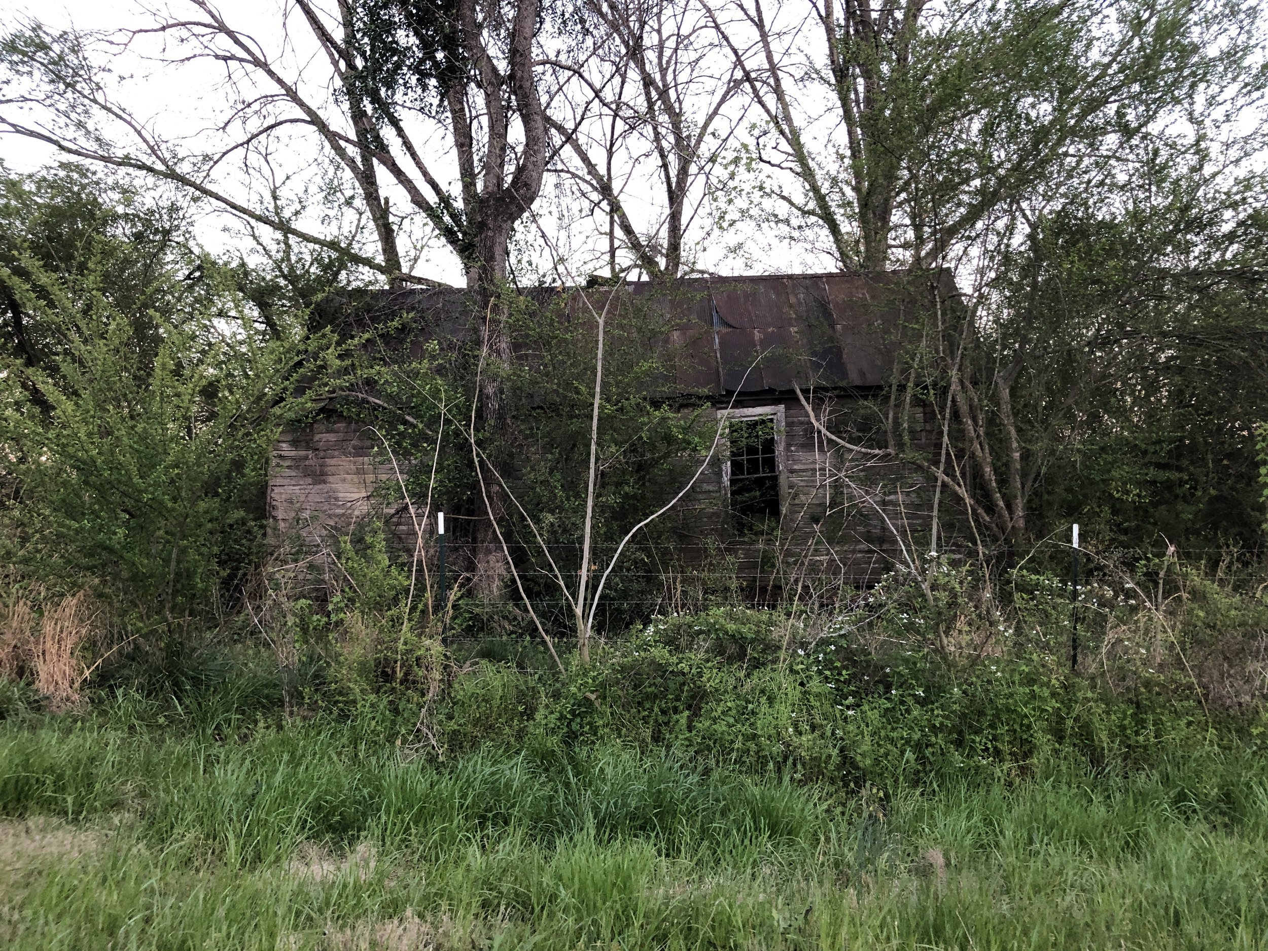 What appears to be an old slave cabin
