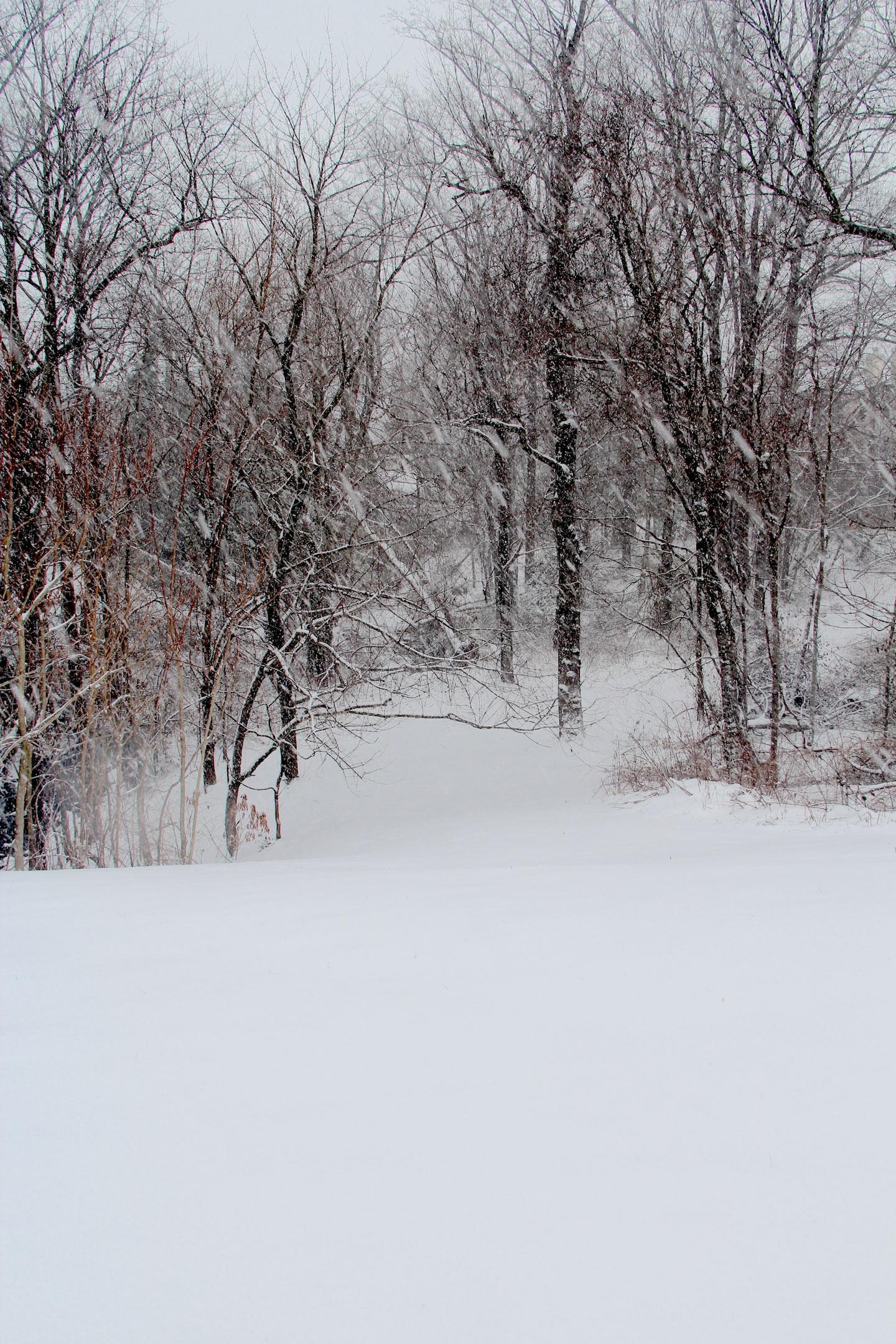 snow5-resized.jpg