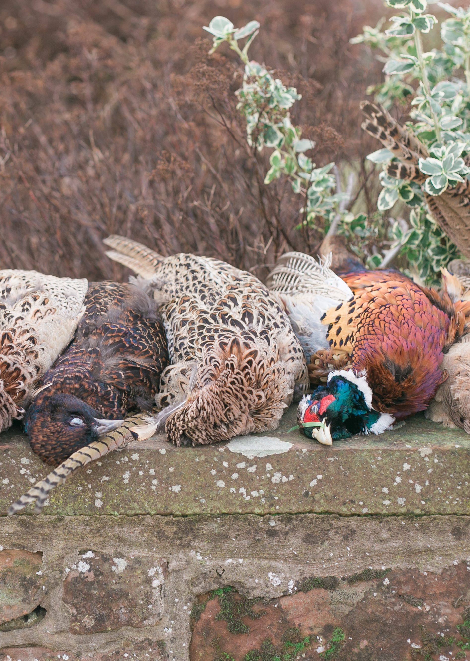 Pheasant_Shoot_27 (1 of 1).jpg