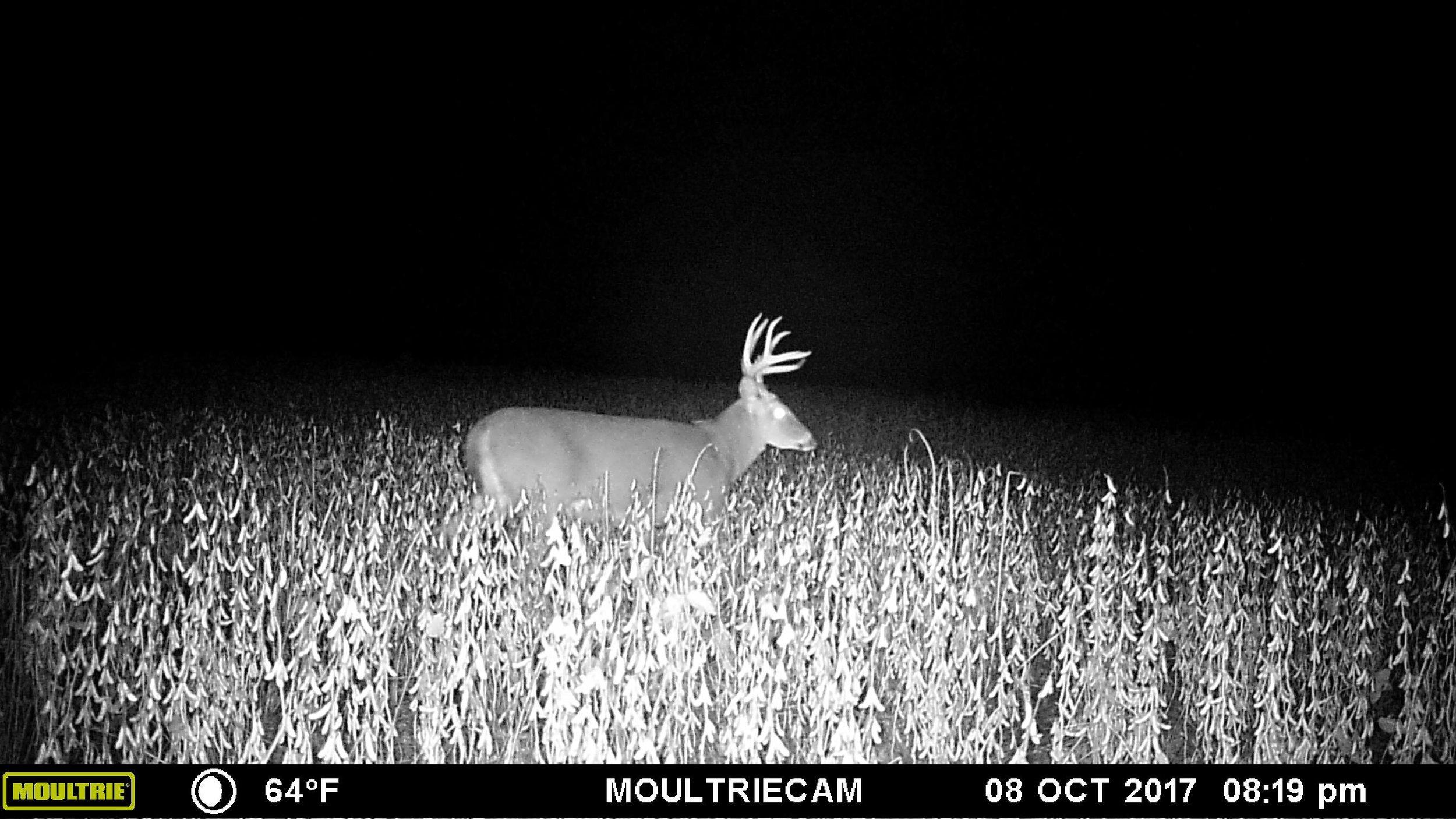 Missouri 2017-35.jpg