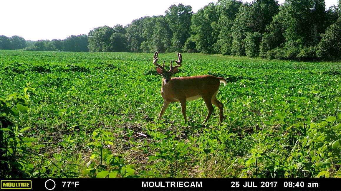 Missouri-2017-10.jpg