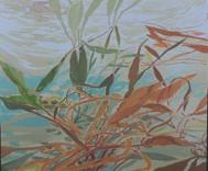 Pond Observation 3.jpg