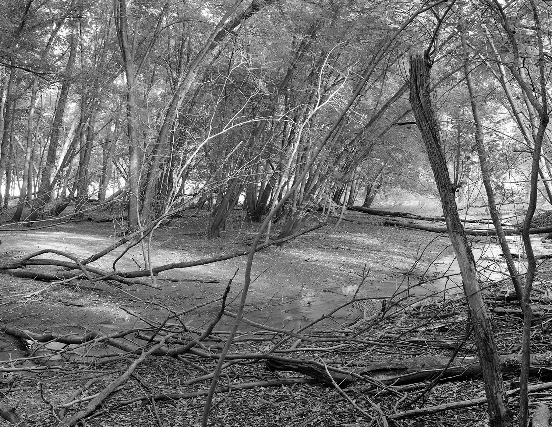 Saint Croix (MN) Floodplain Forest Series, Trout Brook Dry Stream Bed September 2011