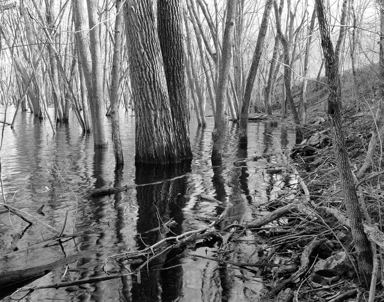 Saint Croix Floodplain Forest Series, Flood Level April 2009