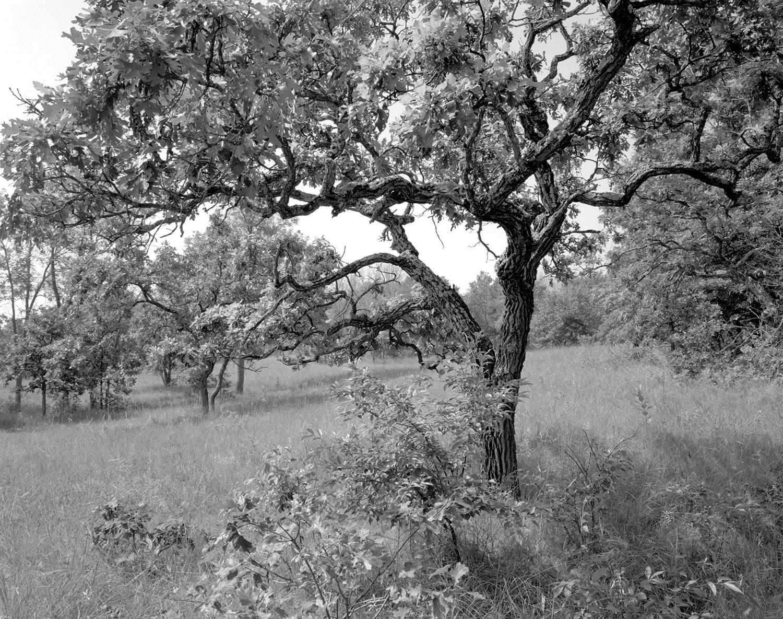 Helen Allison Savanna (MN) Long Meadow, July 2015