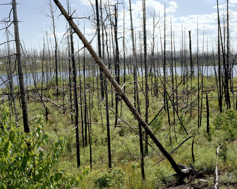 Island River (MN) Pagami Creek Fire Area, Site #3 June 2014