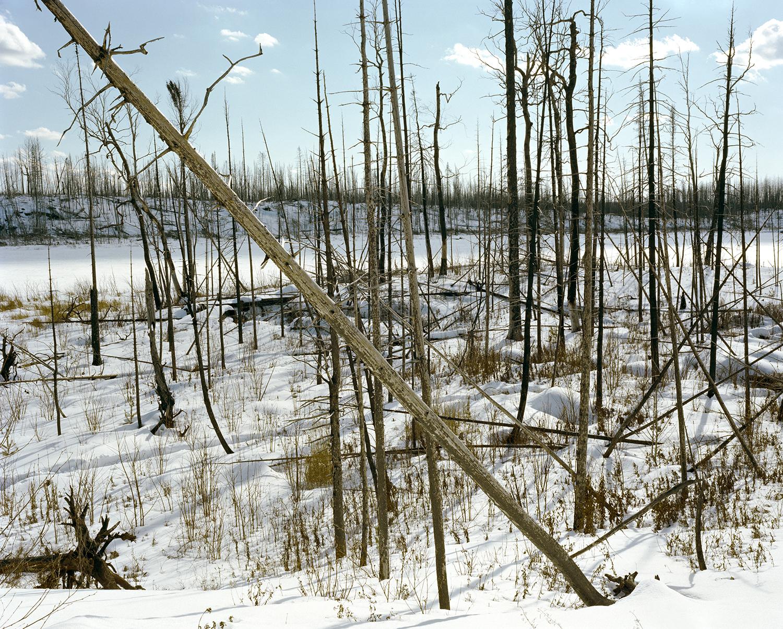 Island River (MN) Pagami Creek Fire Area, Site #3 March 2015
