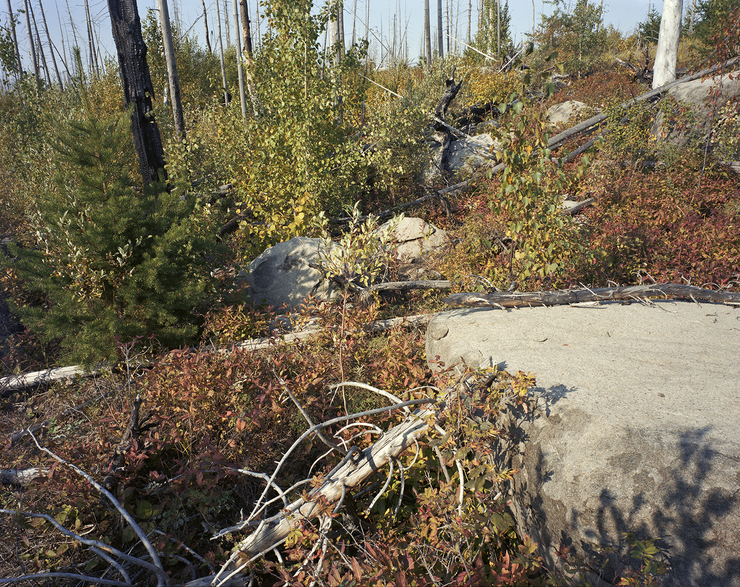 Island River (MN) Pagami Creek Fire Area, Site #2, September 2017