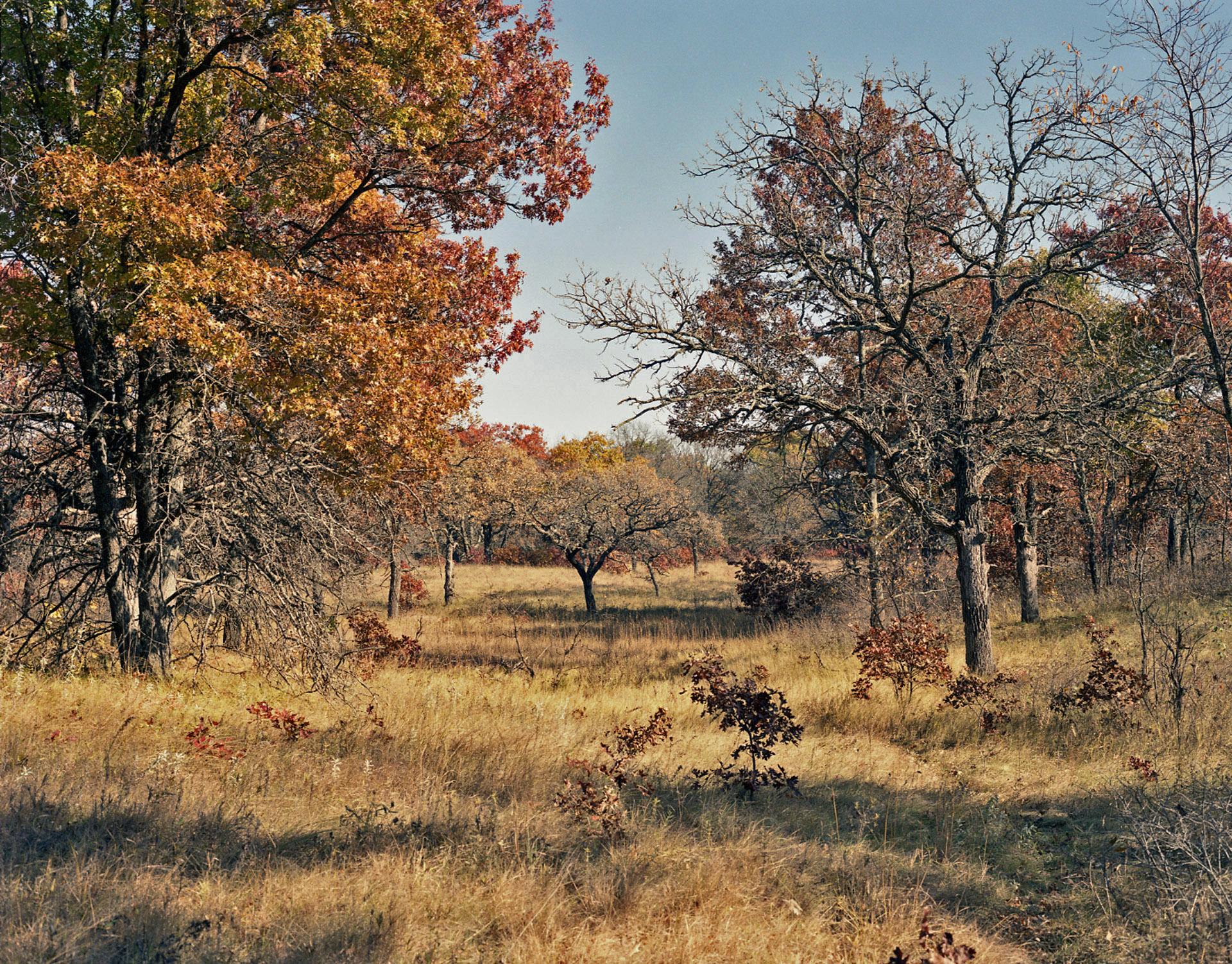 Helen Allison Savanna (MN) Entry Meadow East, October 2001