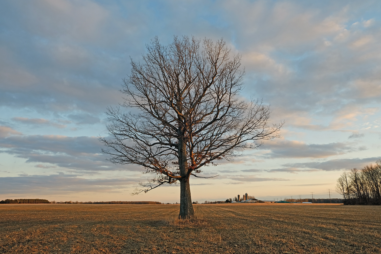 Recent photograph of The Lunch Tree near sunset, March 2019.