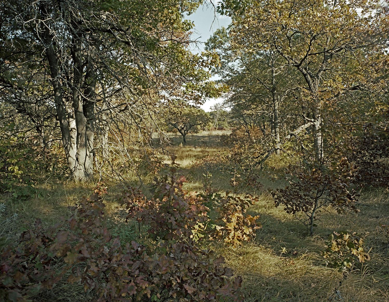 Helen Allison Savanna (MN) Entry Meadow East, October 2013