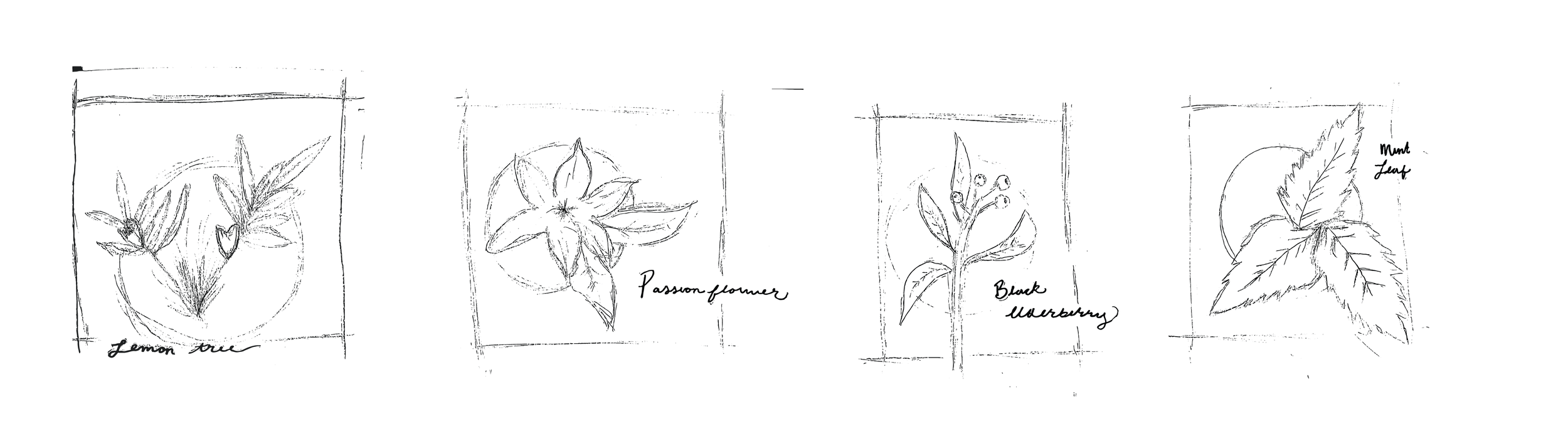 Flavor Sketches-07.png