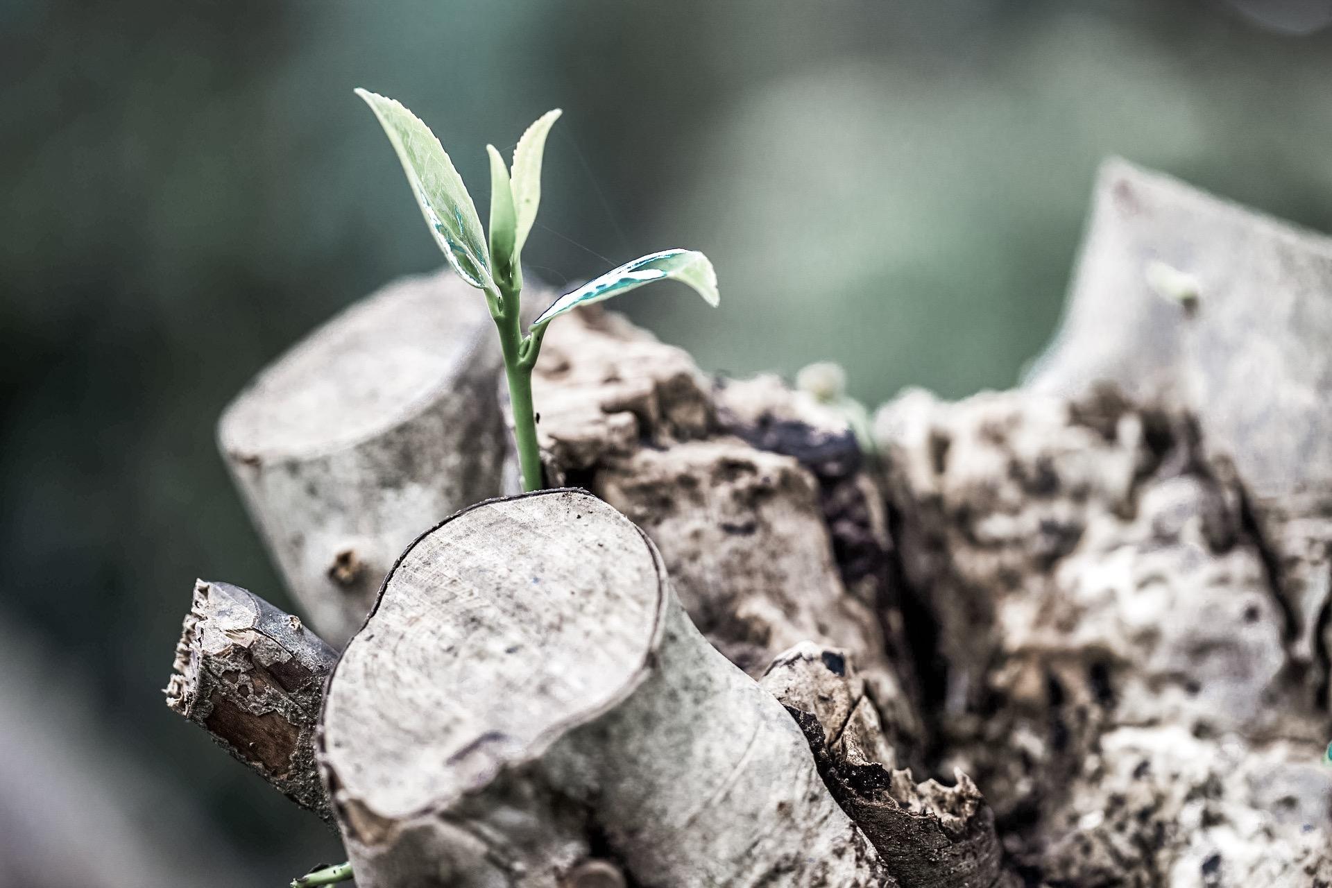 new_growth.jpg