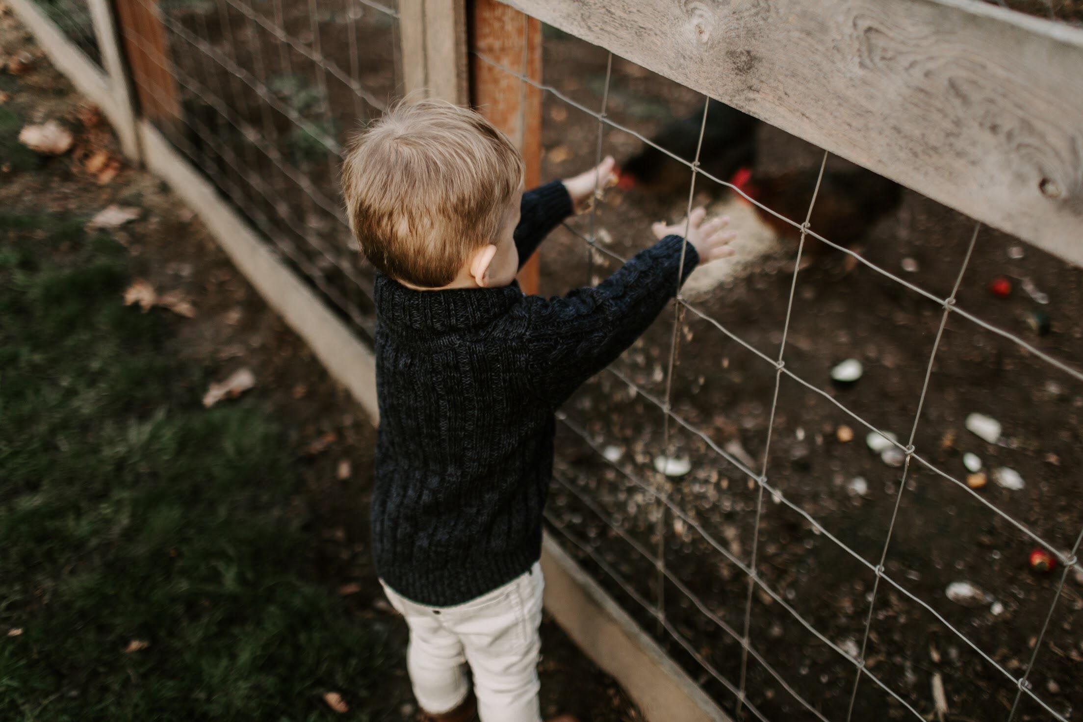 Chickens 7.jpg