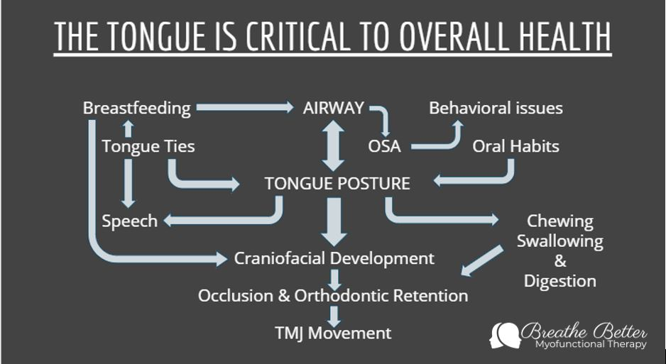 OMD airway with graphic.JPG