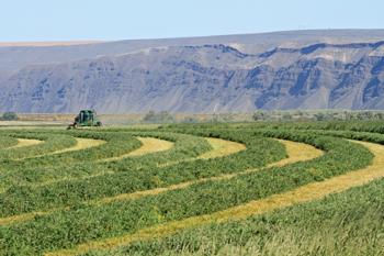 field_harvest_sm.jpg