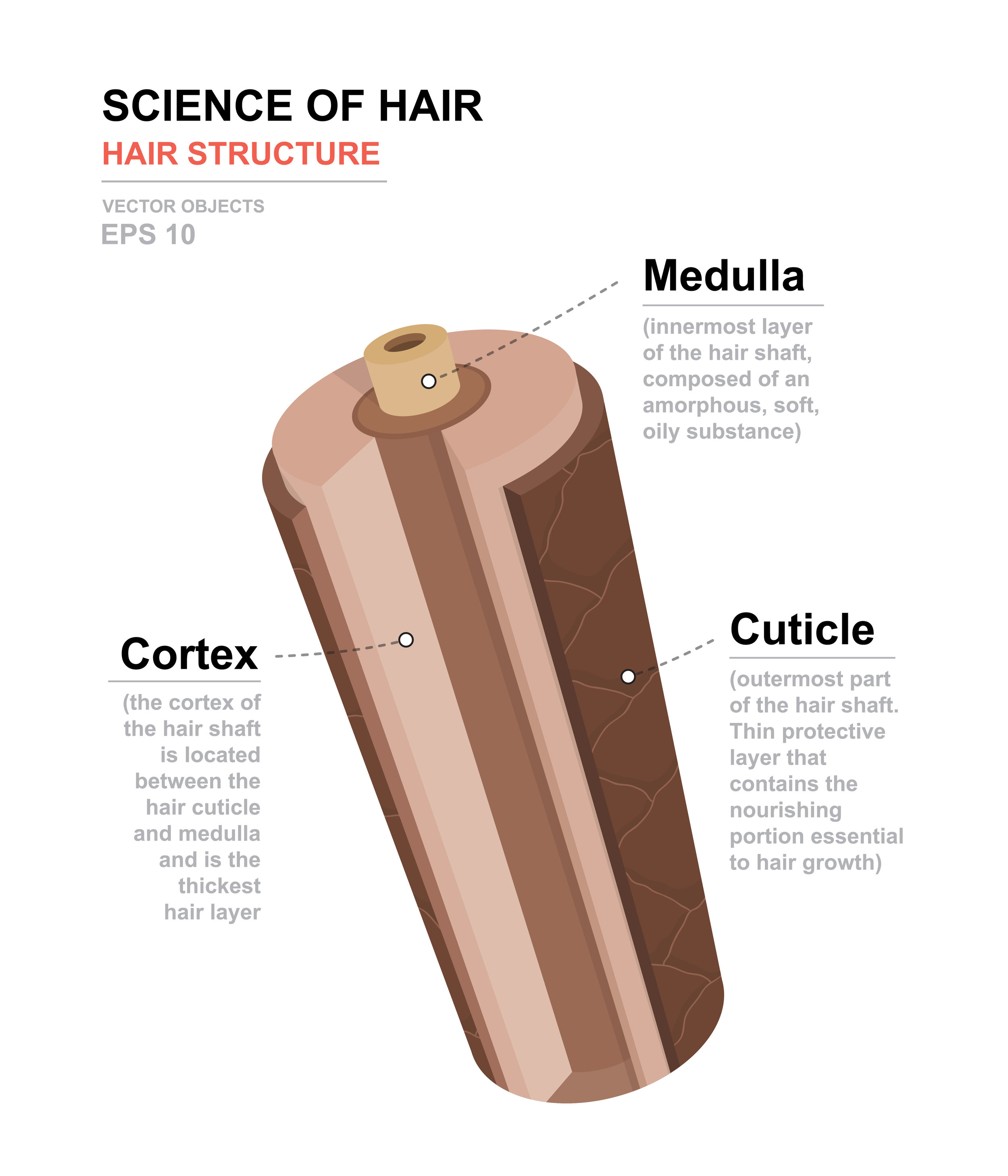 hair shaft anatomy.jpg