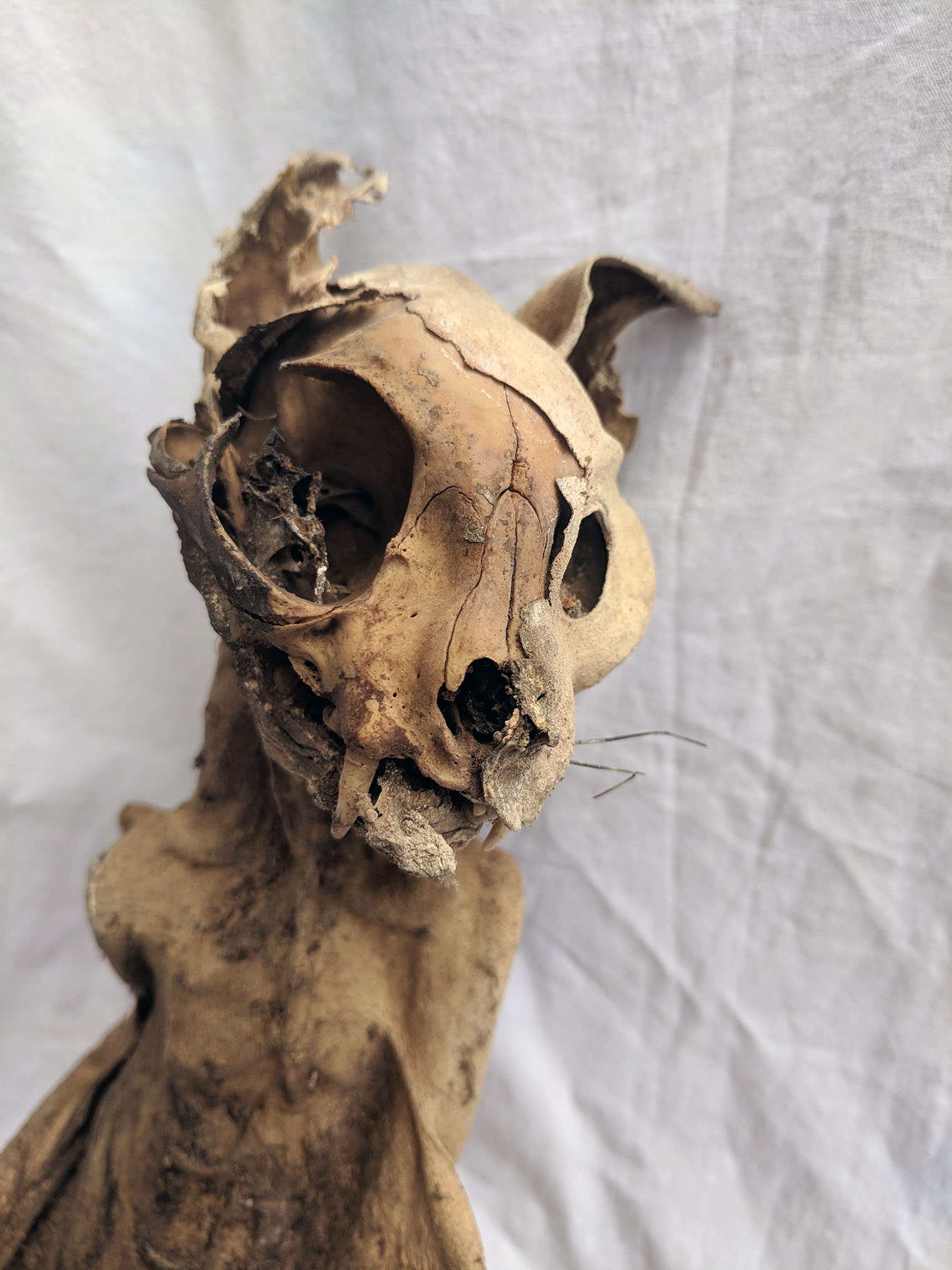 Mummified cat (1).jpg