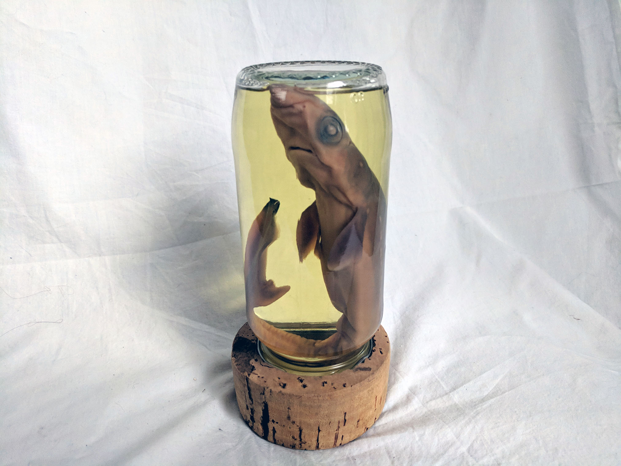 Shark wet specimen (4).jpg