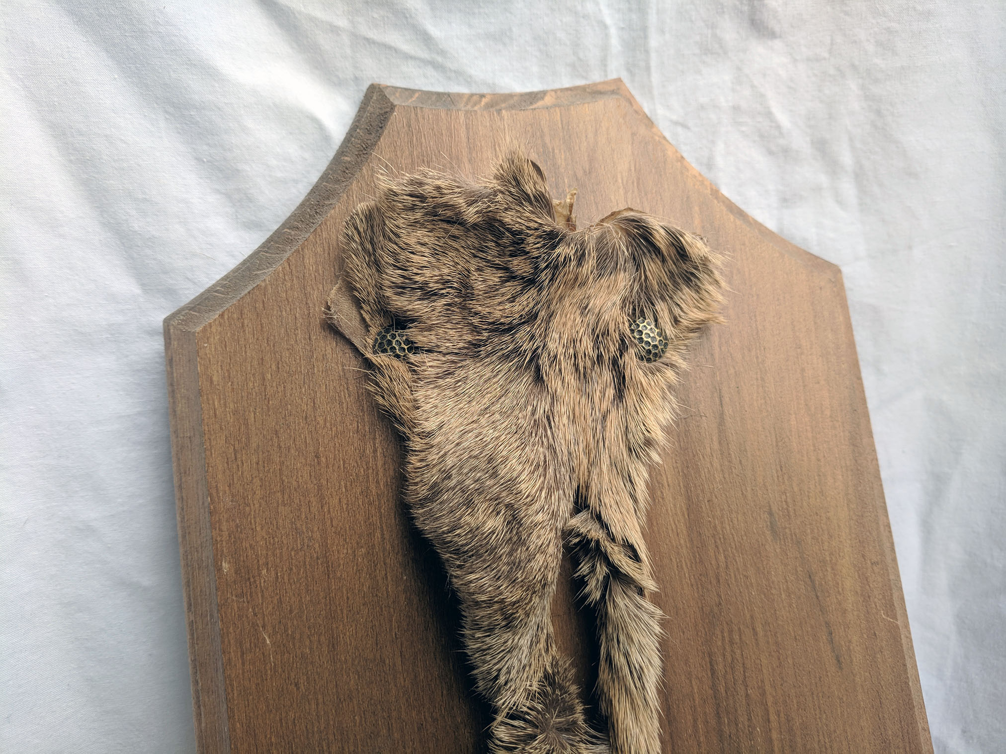 Deer hoof plaque (3).jpg
