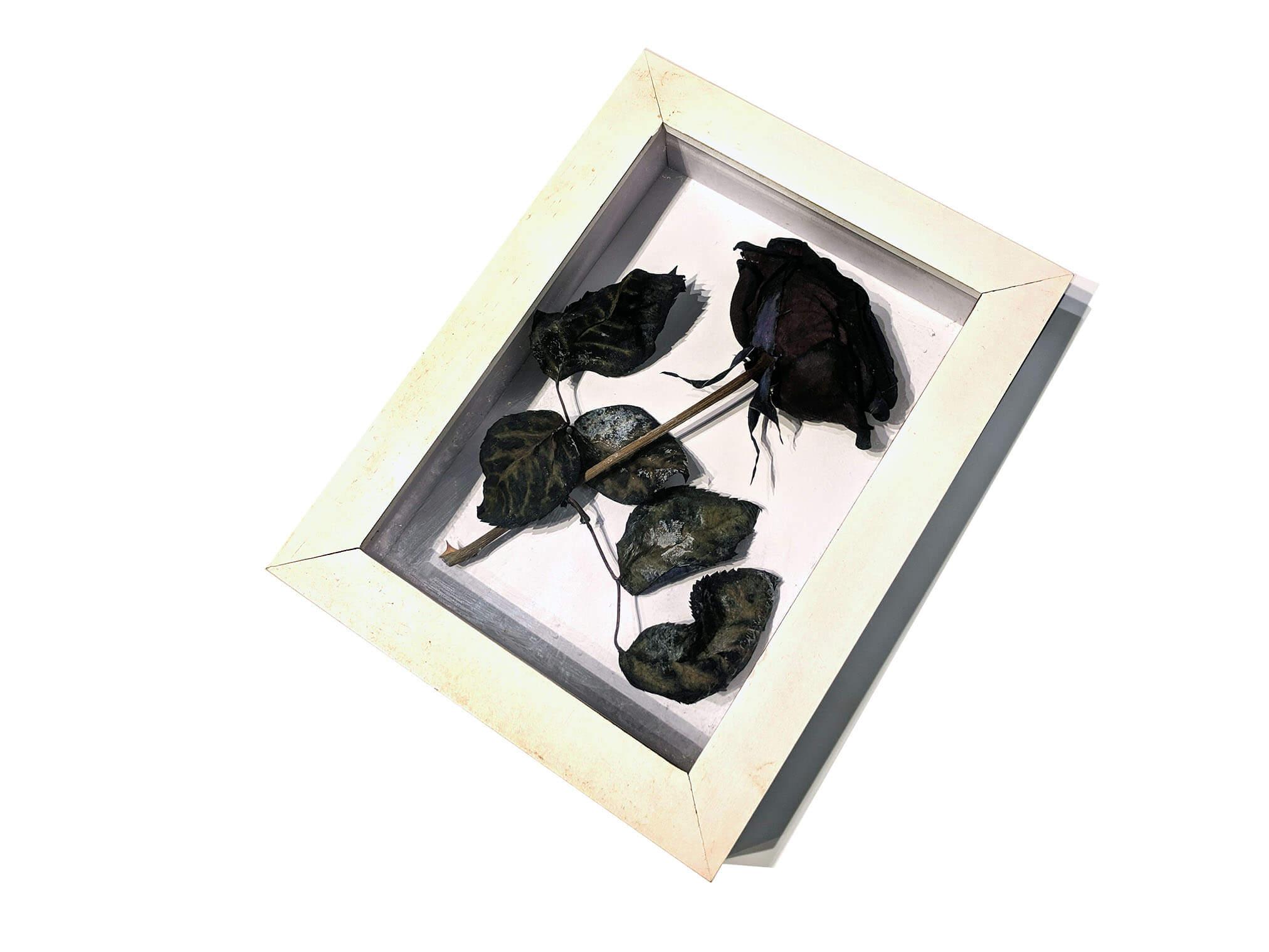 Black roses (3).jpg