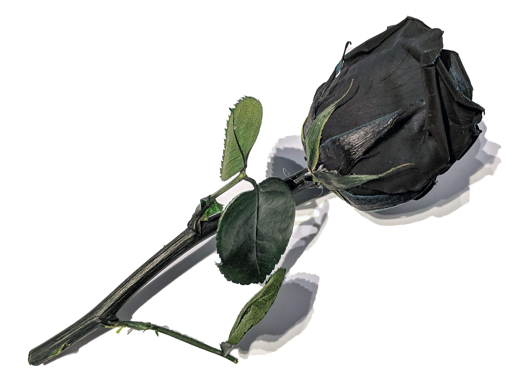 Black roses (1).jpg