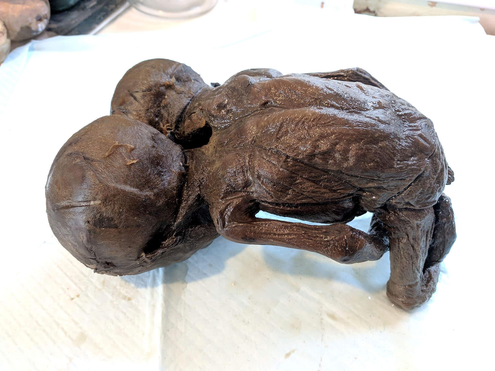 Two headed baby (3).jpg