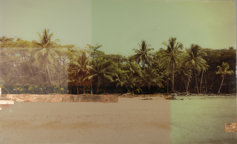 COSTARICA_PALMS 36 x 60.jpg