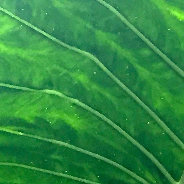 Nature is always giving me the best! Love the patterns and structure in  leaves.