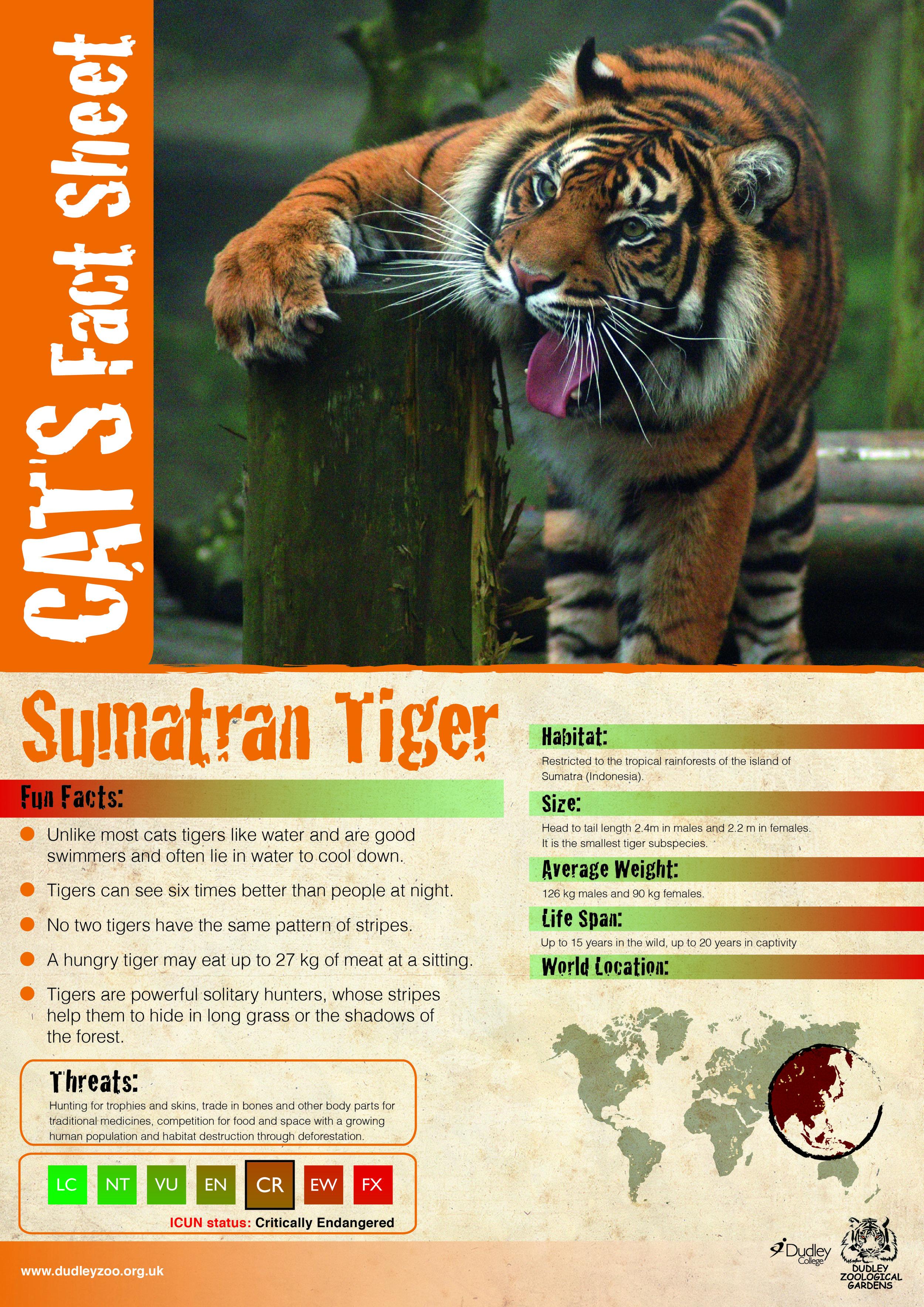 Caron's Tiger-01.jpg