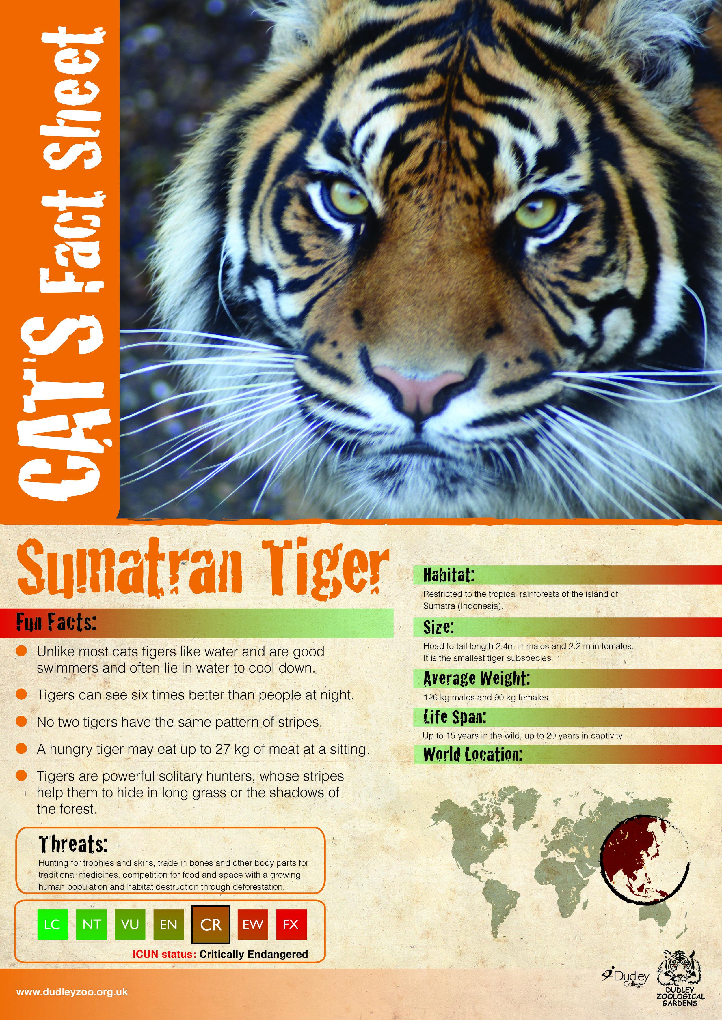 Katie's Tiger-01.jpg