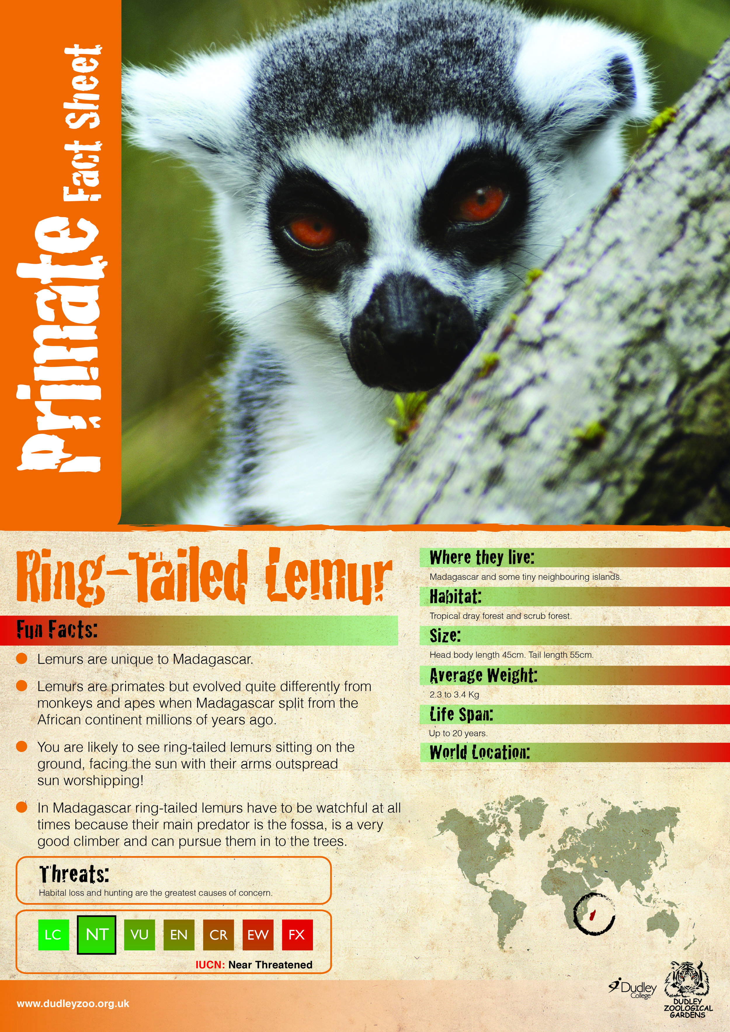 Katie's Lemur final version-02.jpg