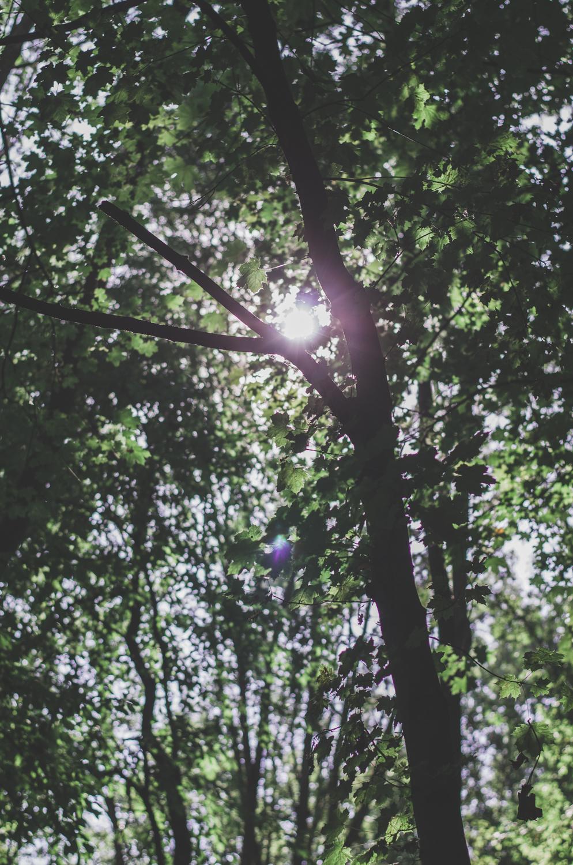 siemer-anne-bremen-fotografie-design-logo-hochzeit-hochzeitsfotograf-lisa-ulrich-21.jpg